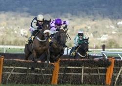 Cheltenham Horserace